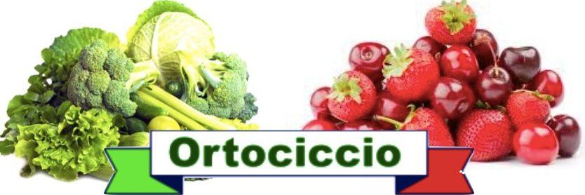 Ortociccio